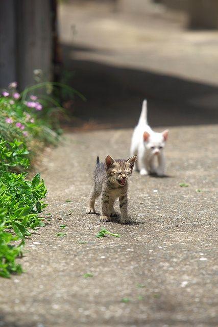 Katzen Sprüche Liebe - Katzen Sprüche Liebe