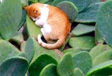 Katzen Verkauf 220x150 - Katzen Verkauf
