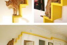 Katzen Verkauf Bilder Kostenlos 220x150 - Katzen Verkauf Bilder Kostenlos