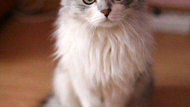 Katzen Verletzungen Bilder 390x220 - Katzen Verletzungen Bilder