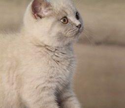 Katzen Vermittlung 254x220 - Katzen Vermittlung