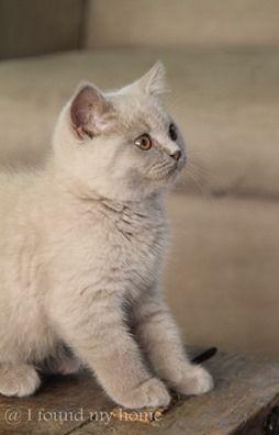 Katzen Vermittlung - Katzen Vermittlung