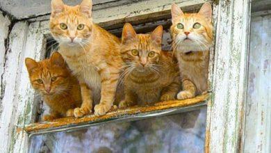 Katzen Videos Kostenlos 390x220 - Katzen Videos Kostenlos