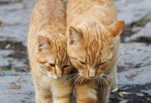 Katzen Würmer 220x150 - Katzen Würmer