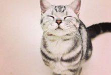 Katzen Witzige Bilder 220x150 - Katzen Witzige Bilder