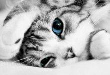 Katzen Züchter 220x150 - Katzen Züchter