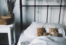 Katzen Zu 220x150 - Katzen Zu