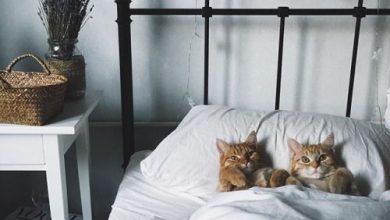 Katzen Zu 390x220 - Katzen Zu
