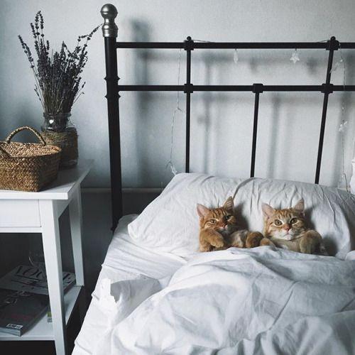 Katzen Zu - Katzen Zu