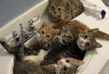 Katzenarten Bilder Kostenlos 220x150 - Katzenarten Bilder Kostenlos