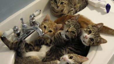 Katzenarten Bilder Kostenlos 390x220 - Katzenarten Bilder Kostenlos