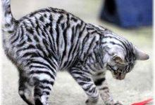 Katzenaufzucht 220x150 - Katzenaufzucht