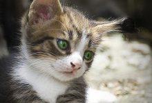 Katzenbaby Bilder Süß 220x150 - Katzenbaby Bilder Süß
