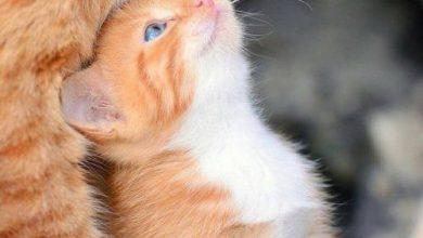 Katzenbabys Bilder 390x220 - Katzenbabys Bilder