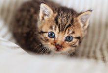 Katzenbabys Fotos Kostenlos 220x150 - Katzenbabys Fotos Kostenlos