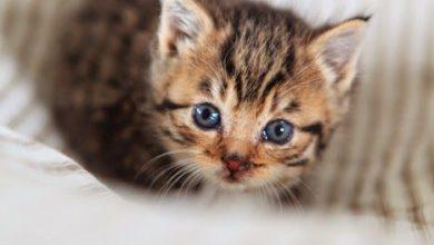 Katzenbabys Fotos Kostenlos 390x220 - Katzenbabys Fotos Kostenlos