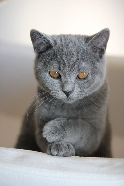 Katzenbabys Kostenlos - Katzenbabys Kostenlos