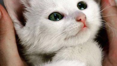 Katzenbabys Verkaufen 390x220 - Katzenbabys Verkaufen