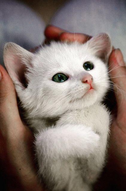 Katzenbabys Verkaufen - Katzenbabys Verkaufen