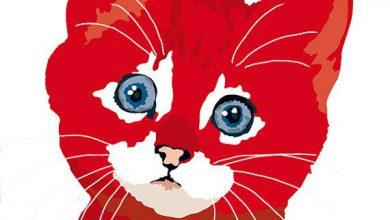 Katzenbabys Zu Verschenken Nrw 390x220 - Katzenbabys Zu Verschenken Nrw