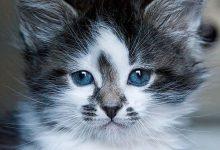 Katzenbild Aus Vielen Kleinen Bildern 220x150 - Katzenbild Aus Vielen Kleinen Bildern