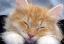 Katzenbilder Als Hintergrund Bilder Kostenlos 220x150 - Katzenbilder Als Hintergrund Bilder Kostenlos