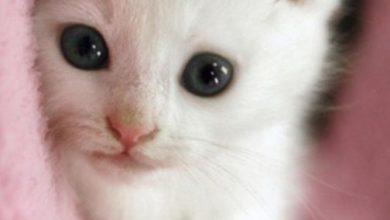 Katzenbilder Als Hintergrund Kostenlos 390x220 - Katzenbilder Als Hintergrund Kostenlos