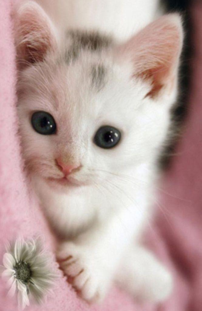 Katzenbilder Als Hintergrund Kostenlos - Katzenbilder Als Hintergrund Kostenlos