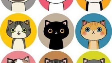 Katzenbilder Desktop Hintergrund 390x220 - Katzenbilder Desktop Hintergrund