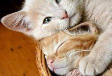 Katzenbilder Für Whatsapp 220x150 - Katzenbilder Für Whatsapp