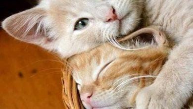 Katzenbilder Für Whatsapp 390x220 - Katzenbilder Für Whatsapp