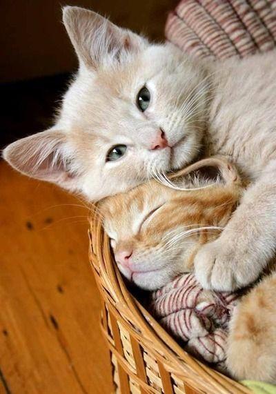 Katzenbilder Für Whatsapp - Katzenbilder Für Whatsapp