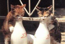 Katzenbilder Gemalt 220x150 - Katzenbilder Gemalt