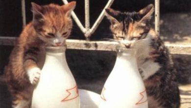 Katzenbilder Gemalt 390x220 - Katzenbilder Gemalt