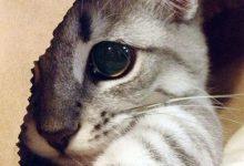 Katzenbilder Guten Morgen 220x150 - Katzenbilder Guten Morgen