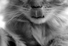 Katzenbilder Kaufen 220x150 - Katzenbilder Kaufen