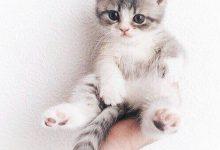 Katzenbilder Kostenlos Downloaden 220x150 - Katzenbilder Kostenlos Downloaden