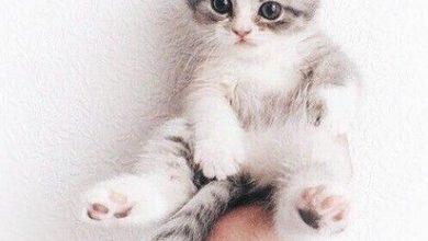 Katzenbilder Kostenlos Downloaden 390x220 - Katzenbilder Kostenlos Downloaden