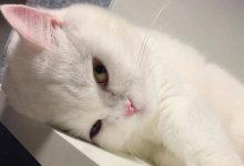 Katzenbilder Kostenlos Zum Ausdrucken 220x150 - Katzenbilder Kostenlos Zum Ausdrucken