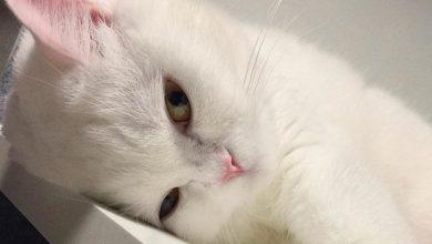 Katzenbilder Kostenlos Zum Ausdrucken 390x220 - Katzenbilder Kostenlos Zum Ausdrucken