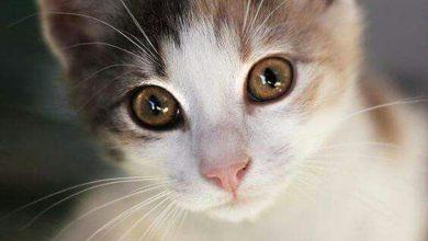 Katzenbilder Lustig Als Hintergrund 390x220 - Katzenbilder Lustig Als Hintergrund