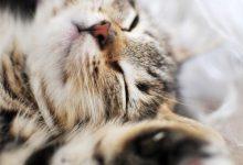 Katzenbilder Lustig Mit Sprüchen 220x150 - Katzenbilder Lustig Mit Sprüchen