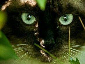Katzenbilder Mit Lustigen Sprüchen 292x220 - Katzenbilder Mit Lustigen Sprüchen