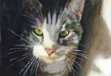 Katzenbilder Mit Lustigen Sprüchen Bilder Kostenlos 220x150 - Katzenbilder Mit Lustigen Sprüchen Bilder Kostenlos