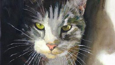 Katzenbilder Mit Lustigen Sprüchen Bilder Kostenlos 390x220 - Katzenbilder Mit Lustigen Sprüchen Bilder Kostenlos