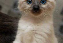Katzenbilder Mit Sprüchen Deutsch 220x150 - Katzenbilder Mit Sprüchen Deutsch