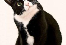 Katzenbilder Mit Sprüchen Kostenlos 220x150 - Katzenbilder Mit Sprüchen Kostenlos