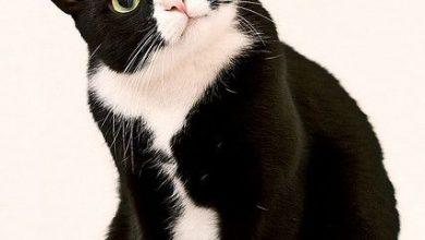 Katzenbilder Mit Sprüchen Kostenlos 390x220 - Katzenbilder Mit Sprüchen Kostenlos