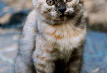 Katzenbilder Mit Text 220x150 - Katzenbilder Mit Text