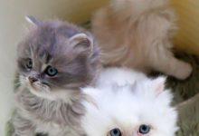 Katzenbilder Ostern 220x150 - Katzenbilder Ostern